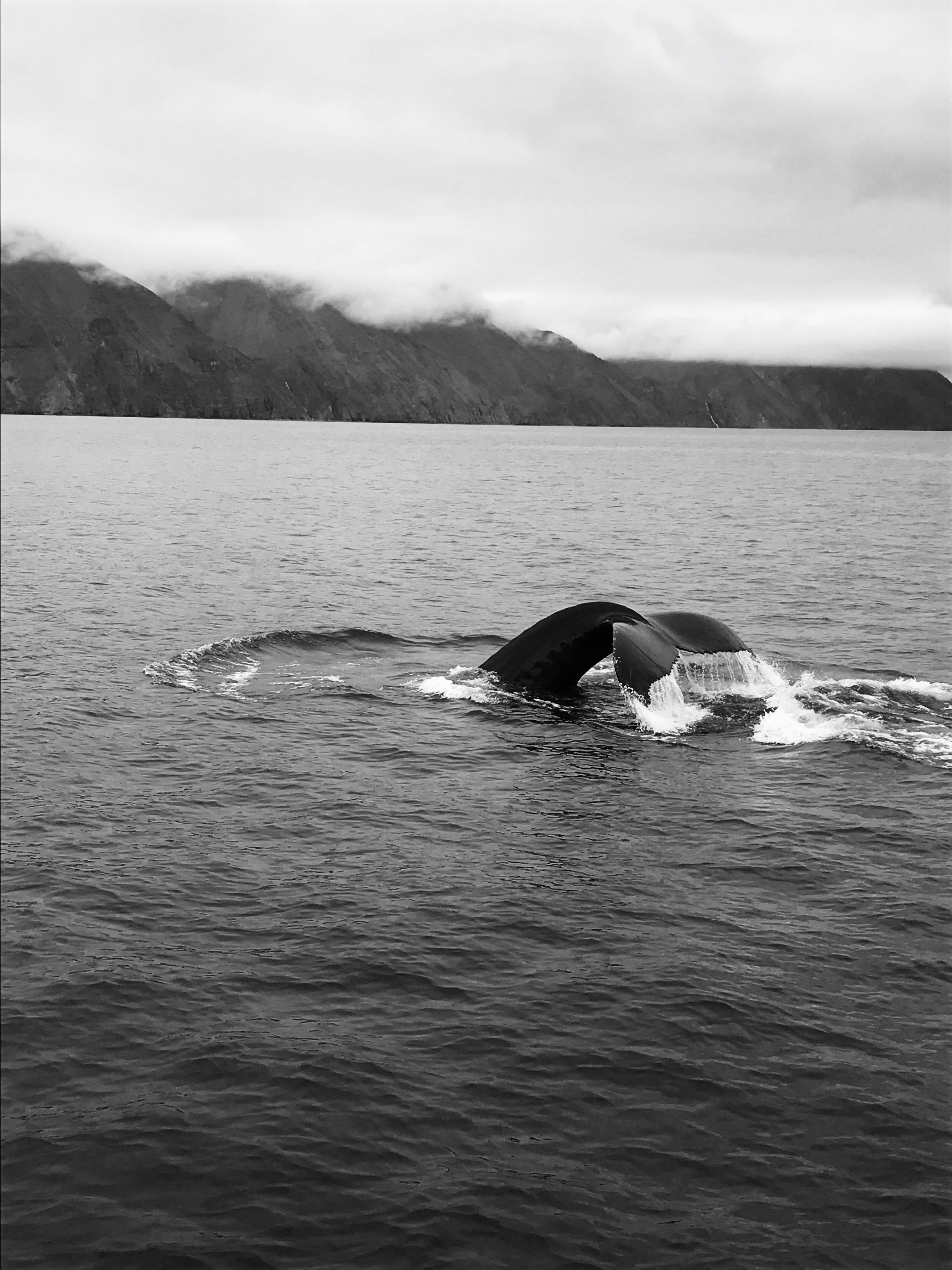 2017 Islanda ©MatteoMigliorini
