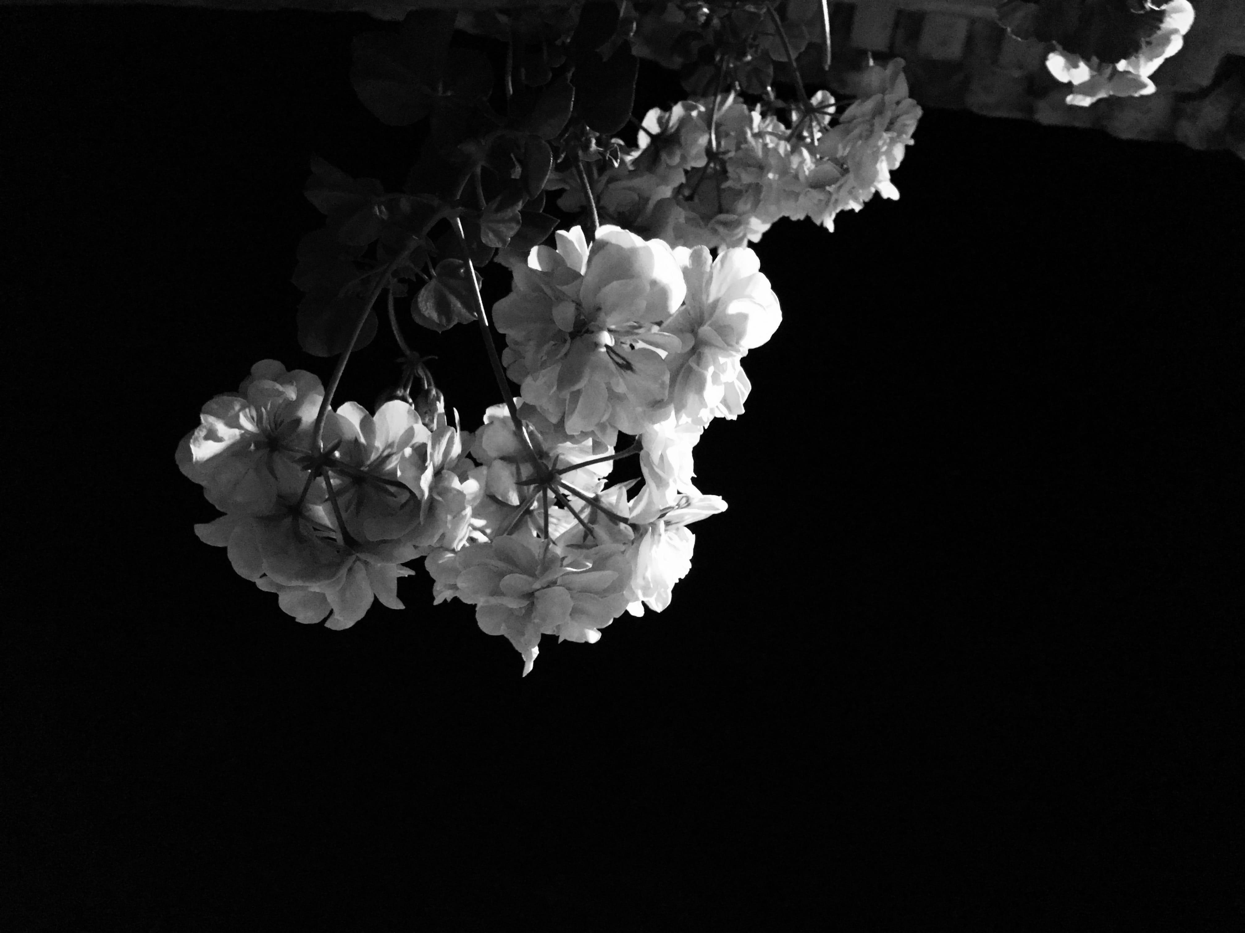 ©2015 Alagna